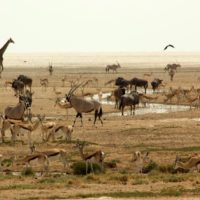 3* Etosha Safari Camp - Namibia Package (3 Nights)